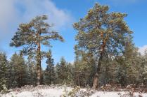 Под защитой лесных исполинов.