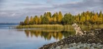 На страже Осени