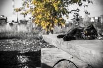 """Осенний кот"""