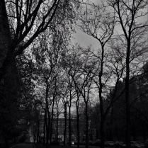 Ажурные деревья