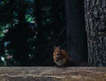 Лесной друг