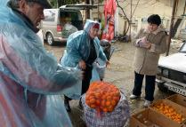 Заготовка мандарин