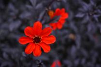 Три цвета: красный