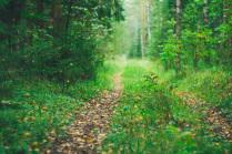 Воскресный лес