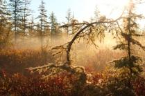 Осень в Арктике