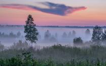 Сиреневый туман, лиловый дракон