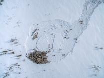 Ямал. Граффити на снегу.
