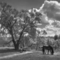 3 Прогулки по Ясной Поляне, объектив монокль, из серии