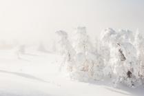 Снежное безмолвие
