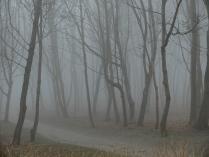 Туман в Янтарном