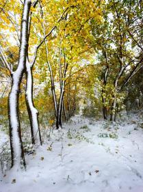 Нежданный снег в октябре