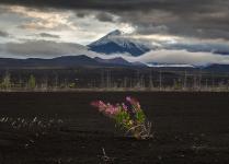 И на вулкане растут цветы