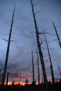 Закат в Мертвом лесу
