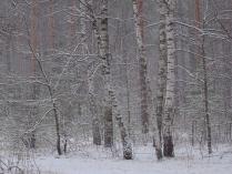 Снежная вязь