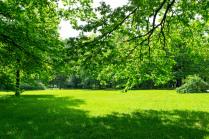 Зелёный луг и тени