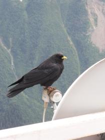 Птица на высоте
