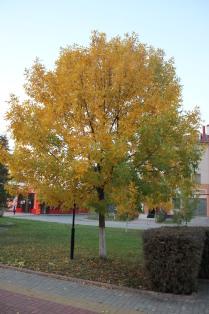А осень уже настала и зима не за горами