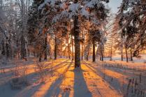 Краски зимнего леса.