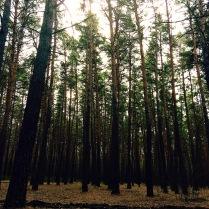 Таинственная сила леса