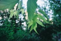 Зелень плавных линий