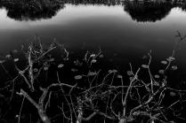 На речке Иловле