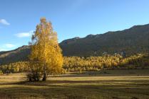 Алтай, золотая осень