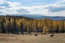 Алтай, осень на Улаганском плато