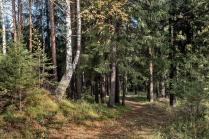 Бабье лето в Уральском лесу