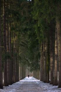Тишина леса