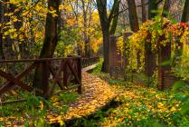 Золотая осень в Куркино