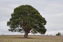 Дерево силы