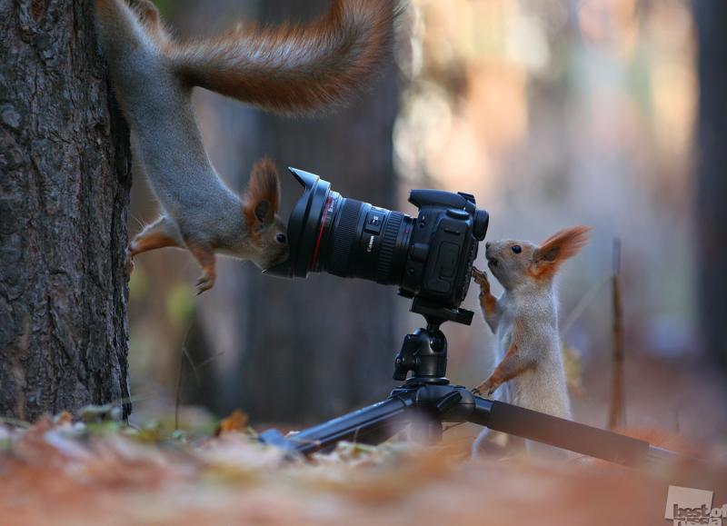 Смотрим прямо в камеру!