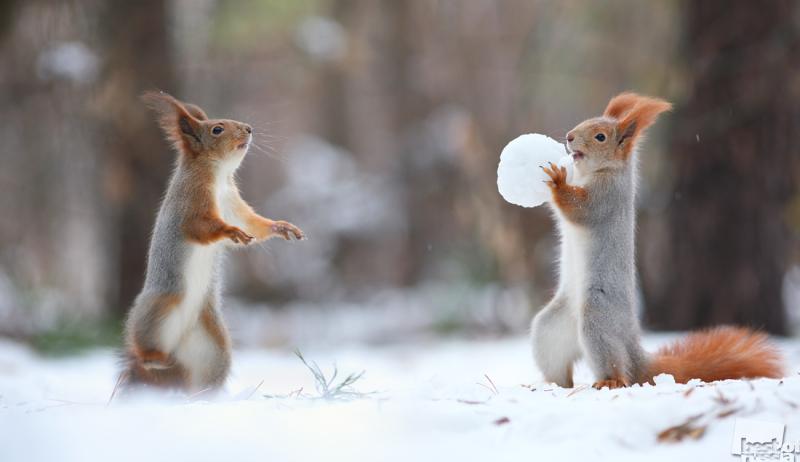 Лови снежок!