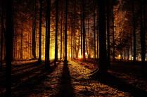 Ночная жизнь леса.