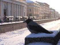 Живая ворона - не хуже грифона!
