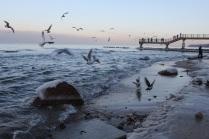 Счастье полета - вкус моря