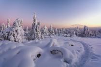 Под покровом зимы.