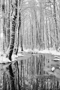 зимой на болоте