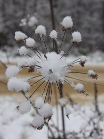 Снежное чудо