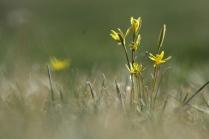Скромная красота забайкальской весны
