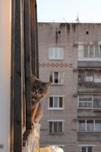 Сосед