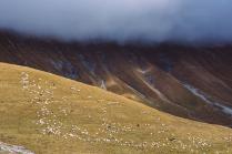 Овцы, горы и туман