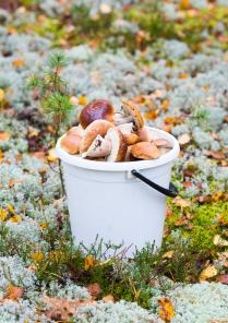 Любителям грибочков посвящается!