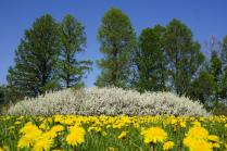 Солнечный майский день