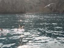 Чайки над водой