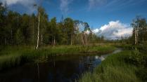 Северное лето