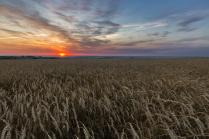 Пшеничный рассвет