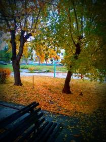 Осенняя палитра 2