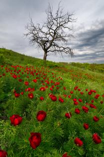 Лазоревые цветы