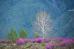 Цветение Маральника в голубых горах Алтая